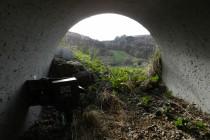 Des tunnels autoroutiers pour animaux
