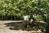 La voie des aromatiques au cœur de la Cotonne, à Sainté