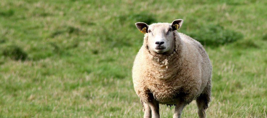 Bien être animal : L'aïd et Préfecture